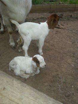 Freckles' Babies born April 3rd 2014